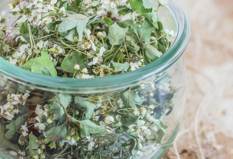 Come essiccare i fiori di biancospino