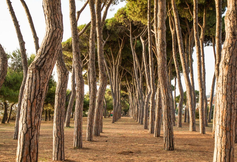 10 motivi per visitare Pineto